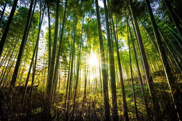 جنگل سیاه خانی ، مقصدی بکر و رویایی برای طبیعتگردی