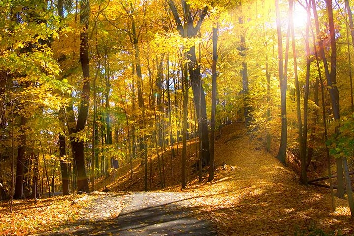 جنگل اولنگ