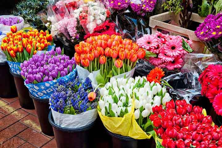گل فروشی پوژان | بهترین گل فروشی های تهران