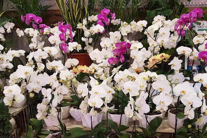 گل فروشی هوشنگ | بهترین گل فروشی های تهران
