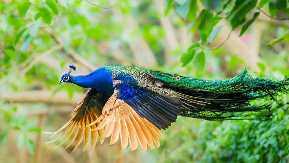 کاور باغ پرندگان اصفهان