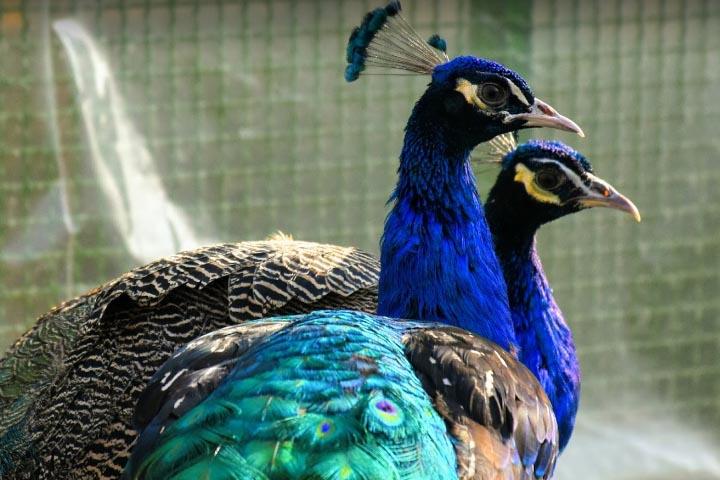 tags - 92 1 - باغ پرندگان اصفهان و معرفی بخشهای مختلف آن + عکس - %da%af%d8%b1%d8%af%d8%b4%da%af%d8%b1%db%8c%