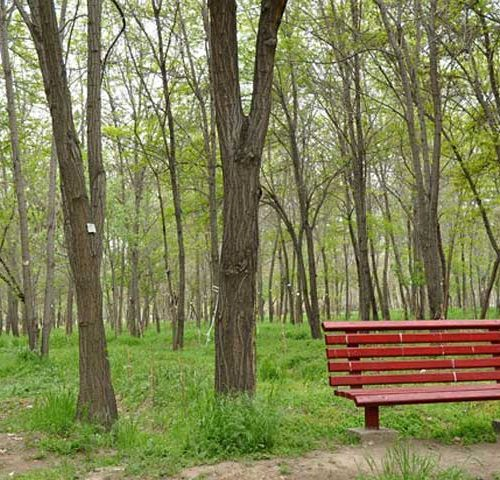 پارک-جنگلی-طرق---مشهد---سفرزون