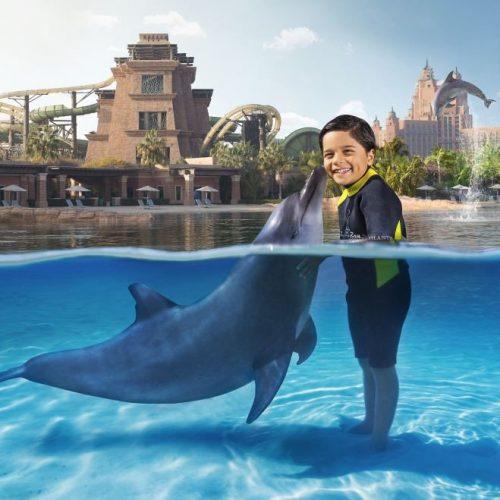 سرزمین دلفینها